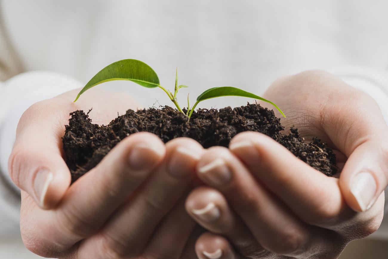floressa-plantes-vivaces-potagers-vegetaux-aromatiques-arbustes-fleurs-massifs-saisonniers-jardinerie-horticulteur-pepinieriste-slider-test-1300-14