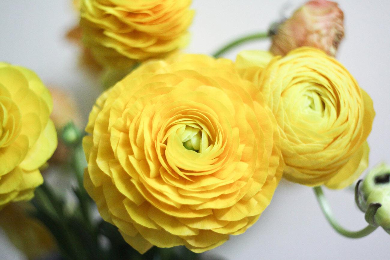 floressa-plantes-vivaces-potagers-vegetaux-aromatiques-arbustes-fleurs-massifs-saisonniers-jardinerie-horticulteur-pepinieriste-slider-test-1300-18