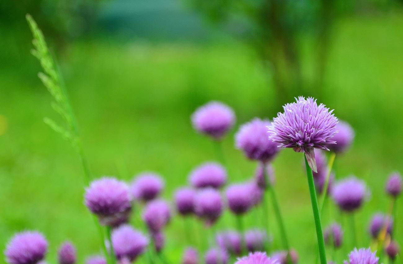 floressa-plantes-vivaces-potagers-vegetaux-aromatiques-arbustes-fleurs-massifs-saisonniers-jardinerie-horticulteur-pepinieriste-slider-test-1300-21
