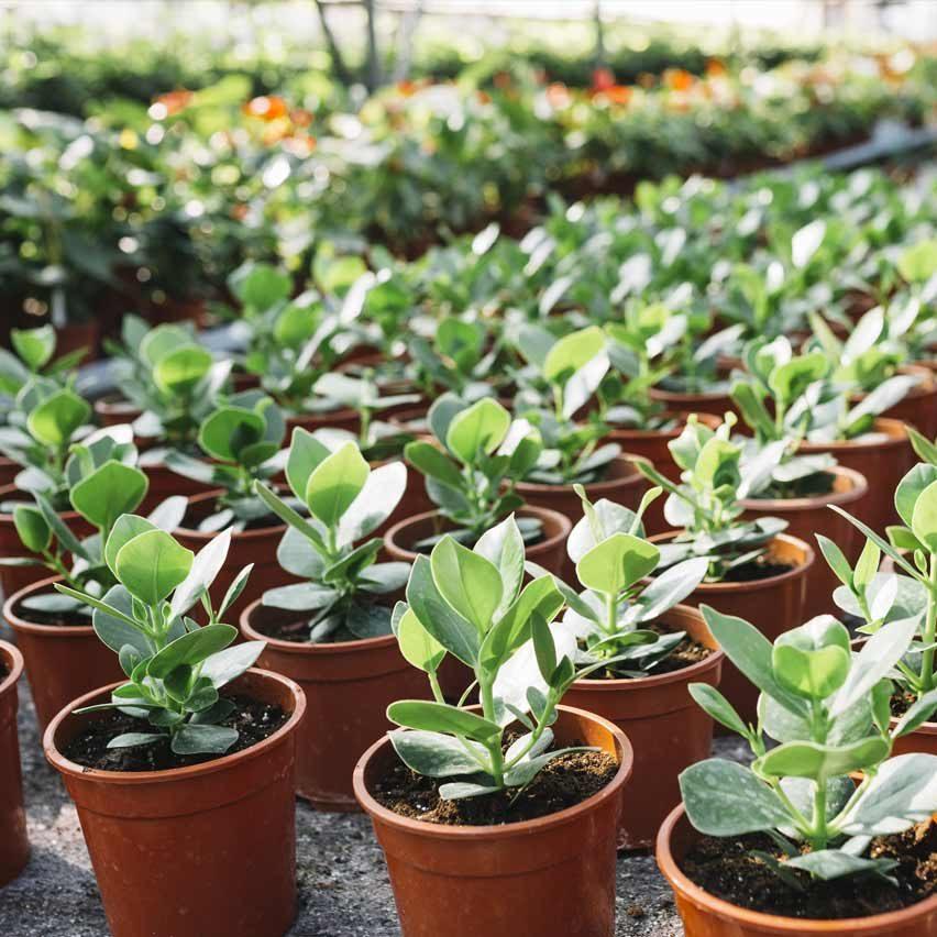 floressa-plantes-vivaces-potagers-vegetaux-aromatiques-arbustes-fleurs-massifs-saisonniers-jardinerie-horticulteur-pepinieriste-ambi-03